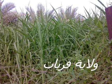 المتابعة اليومية للطقس في العالم العربي من 16 / 8 / وحتى 19 / 8 / 2009 م 25088_11250371656